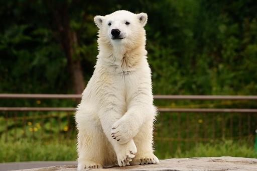 動物園の画像です
