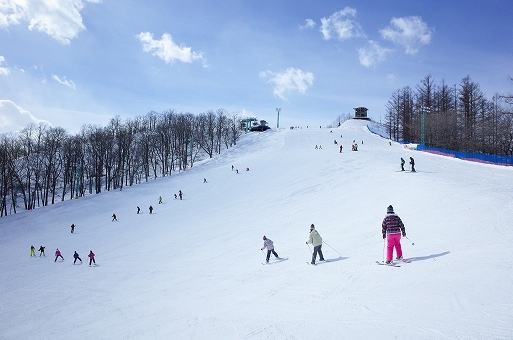 スキーの画像です