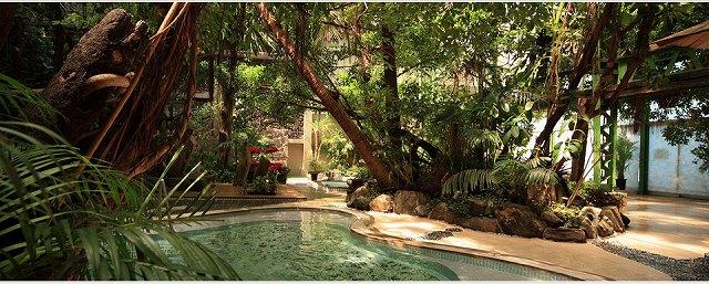 ジャングル風呂の画像です