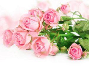 ピンクのバラの画像です