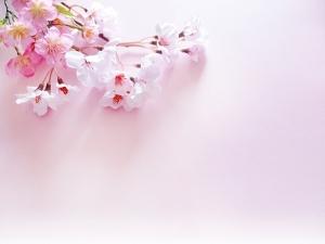 桃の花の画像です