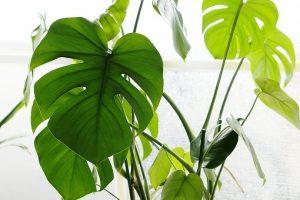 観葉植物の画像です