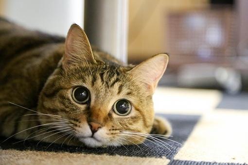 猫の画像です