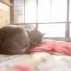 暖かそうな猫の画像です