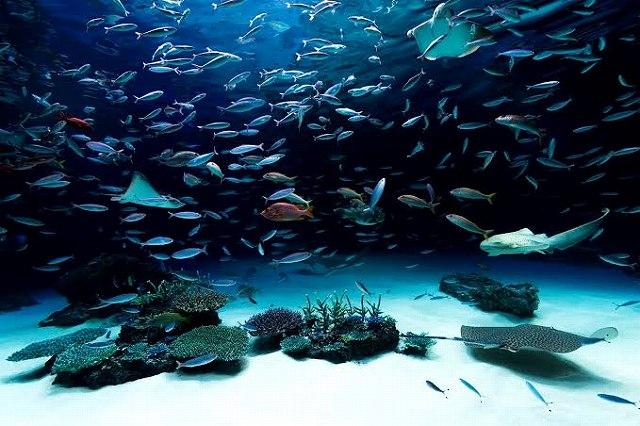 水族館の画像です