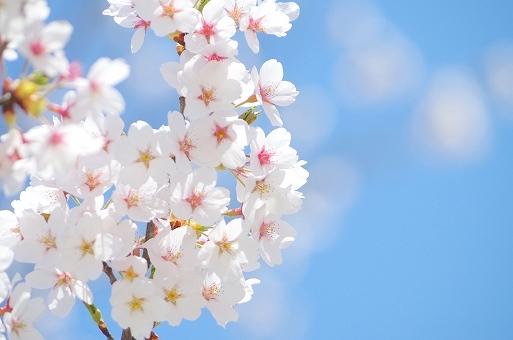 春のイメージ画像です