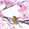 鳥の画像です