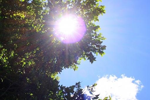 夏のイメージ画像です